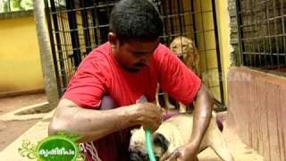 getlinkyoutube.com-Success story of dog keeping as a business enterprise of a young man.