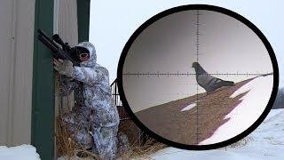 getlinkyoutube.com-Winter Pigeon Hunting with my FX Bobcat .25