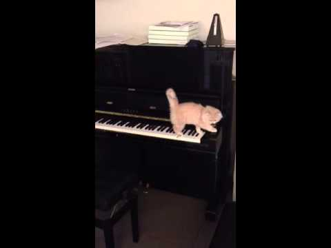Googl (cat) playing first time on piano