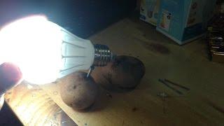 getlinkyoutube.com-Free energy, Rahasia misteri kentang bisa menyalakan lampu LED