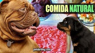 getlinkyoutube.com-COMO HACER COMIDA CASERA PARA PERROS natural, fácil y barato! :) ★ PetDarling Recetas 2