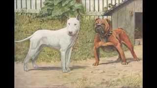 getlinkyoutube.com-Diferencias entre un American Pit Bull Terrier y un American Stafforshire Terrier