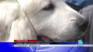 Perro reelecto como alcalde en Comorant, Minnesota