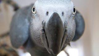 getlinkyoutube.com-Lustige Papageien Tanzen Compilation 2015 - Niedliche Eulen - 720P