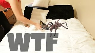 getlinkyoutube.com-THIS WAS LIVING IN OUR BED???