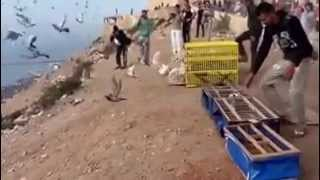 getlinkyoutube.com-تدريب الحمام الزاجل بمدينة أكاديـــر (أكادير افلا)