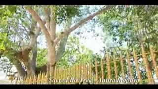 getlinkyoutube.com-A documentary Film on SRI LANKA - 01