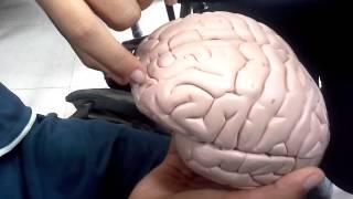 getlinkyoutube.com-Maqueta surcos y giros cerebro