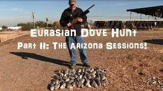 getlinkyoutube.com-Airgun Dove Hunts! Pest control on a dairy farm!