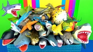 getlinkyoutube.com-Shark Toys Collection Whales Fish Turtles Jaws Toys for Kids Tiburón Tubarão - Educational