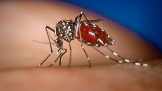 getlinkyoutube.com-Treatment of Chikungunya (Ayurvedic & homeopathic) By Rajiv Dixit