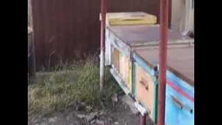 getlinkyoutube.com-Изоляторы для маток (пчеловод Дорошев С.Н.)