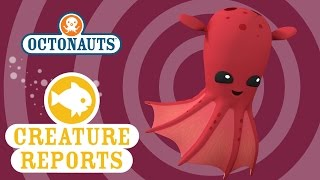 getlinkyoutube.com-Octonauts: Creature Reports - Vampire Squids
