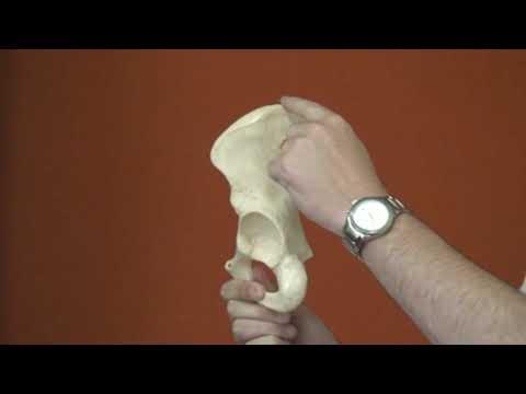 osso do quadril