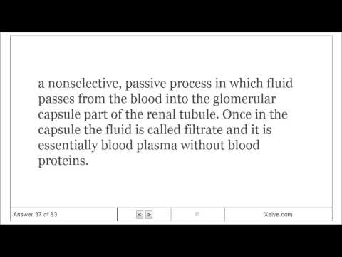 Introduction to Human Anatomy and Physiology - 15 The Urinary System - Flashcards
