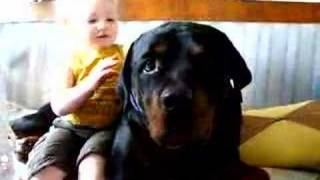 getlinkyoutube.com-My Rottweiler and my son Edvin attacked...!!.........With kisses :-)