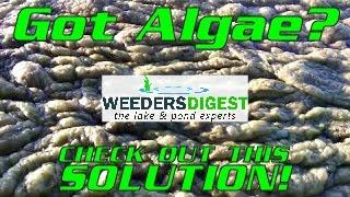 getlinkyoutube.com-Removing Lake Algae and Pond Algae