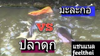 getlinkyoutube.com-วิธีเลี้ยงปลาดุกด้วยมะละกอ บ้านเขากลม กระบี่