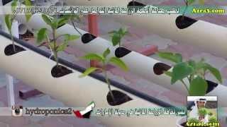 getlinkyoutube.com-طريقة تثبيت الاكواب الورقية في نظام المثلث الخاص بالزراعة المائية