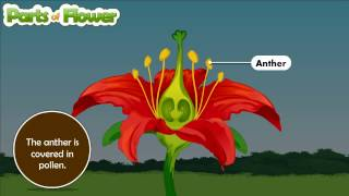 parts of Flower and their function for kids