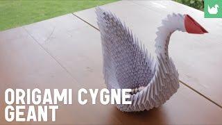 getlinkyoutube.com-Cygne Géant