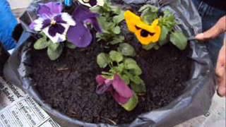 getlinkyoutube.com-Como plantar plantines? (idea en maceta decorativa)