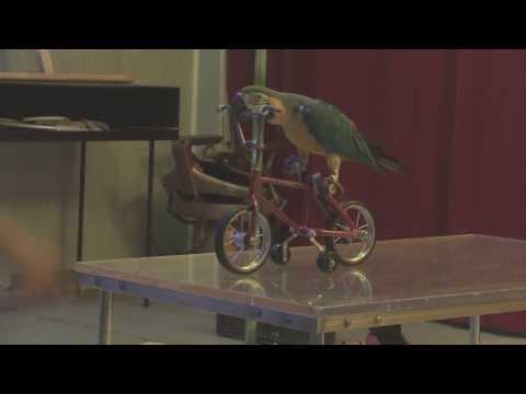 Dresor papagali - Circ & Variete Globus