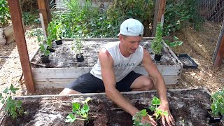 Raised-Bed Gardening - How to Grow a Garden in Raised Beds!