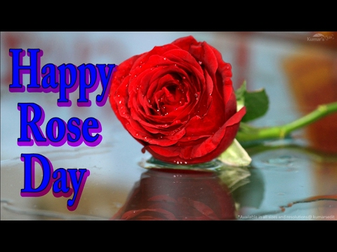 Rose day flower images free download