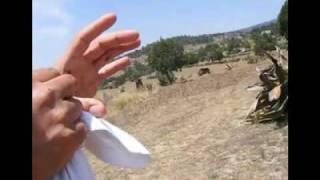 getlinkyoutube.com-BUSCANDO, SACANDO Y LIMPIANDO ESCAMOLES y aguantando piquetes de hormigas
