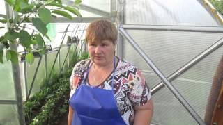 getlinkyoutube.com-Много советов по ОГУРЦАМ: как подвязать,подкормить и...