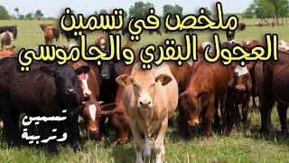 getlinkyoutube.com-تسمين العجول البقري والجاموسي وما يجب مراعاته