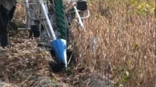 getlinkyoutube.com-Walk Behind Bean Harvester (Cutter) BH-710 Hanseo Korea