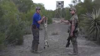 getlinkyoutube.com-Hog Hunting and Predator Hunting with AR-15 in Texas