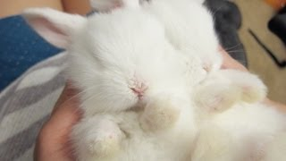 Sleepy Baby Bunny Massage!