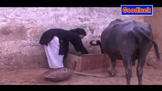 जबरजस्ती ना करें बहू के साथ में Dehati Drama Haryanvi short film ~ Goodluck Media