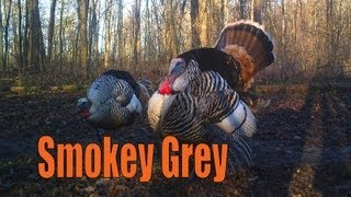 getlinkyoutube.com-Rare Turkey Hunt