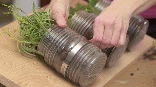 getlinkyoutube.com-How to Plant an Indoor Hanging Herb Garden with Gina
