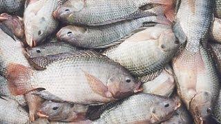 getlinkyoutube.com-طريقة تنظيف السمك How to Clean/Gut a Fish