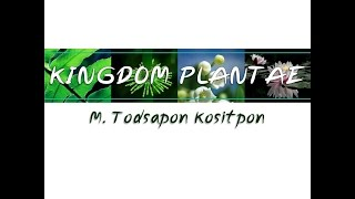 getlinkyoutube.com-Kingdom Plantae อาณาจักรพืช