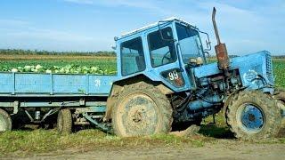 getlinkyoutube.com-#342. Тюнинг трактор МТЗ в поле