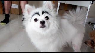 getlinkyoutube.com-DOG WITH EYEBROWS