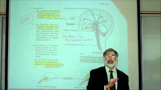 getlinkyoutube.com-REVIEW OF THE FUNCTIONAL AREAS OF THE BRAIN; Part 1 by Professor Fink
