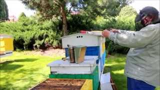 getlinkyoutube.com-Pszczoły. Izolatory Chmary V. Izolowanie matek przed zimowlą