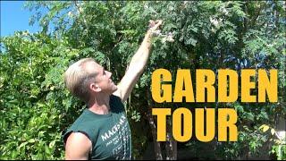 getlinkyoutube.com-Arizona Garden Tour - Over 200 Fruit Trees on 1/3 Acre - Spring 2016