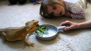 getlinkyoutube.com-Bearded dragon Nacho and our kids!