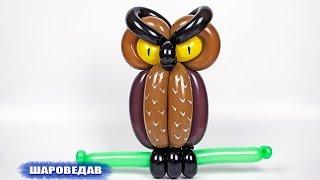 getlinkyoutube.com-Сова из воздушных шаров / Owl of balloons