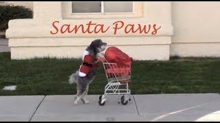 getlinkyoutube.com-Dog Saves Christmas- SANTA PAWS