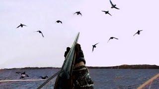 getlinkyoutube.com-Duck Hunting: Diver Ducks