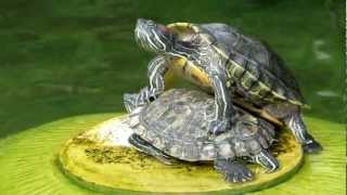 getlinkyoutube.com-Zooming with Canon SX50 HS - Turtles